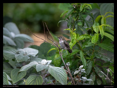 Fort Mason-Birding 8-11-17