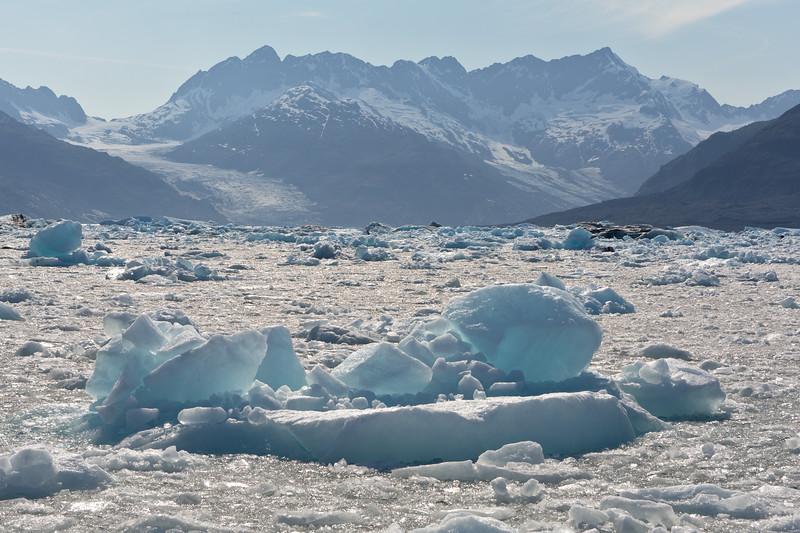 Icebergs in the iceflow