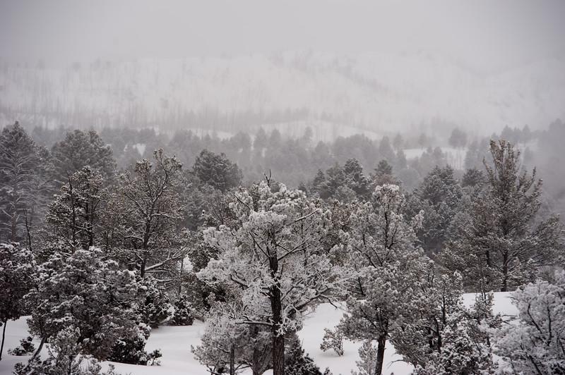 White Yellowstone