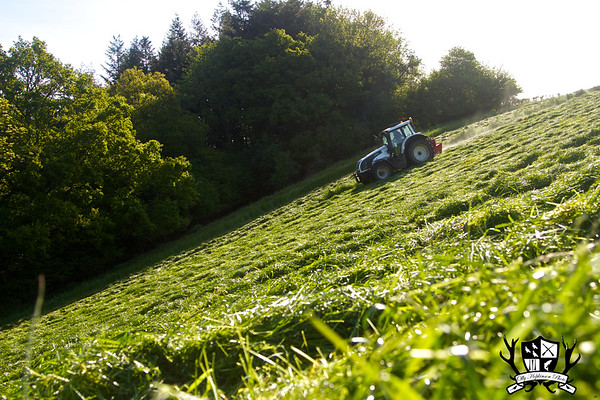 Silage - Williams