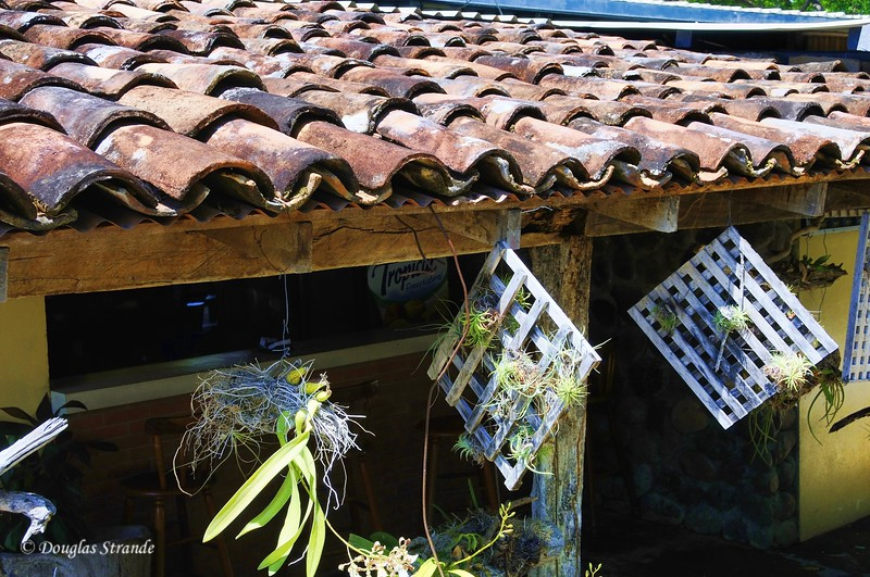 On The Road: Tiles and Bromiliads