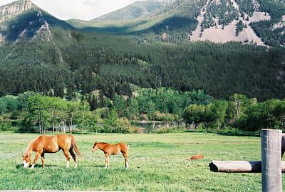 Montana: Yellowstone to Glacier