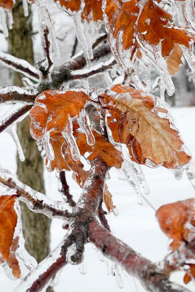 IceStorm-116.jpg