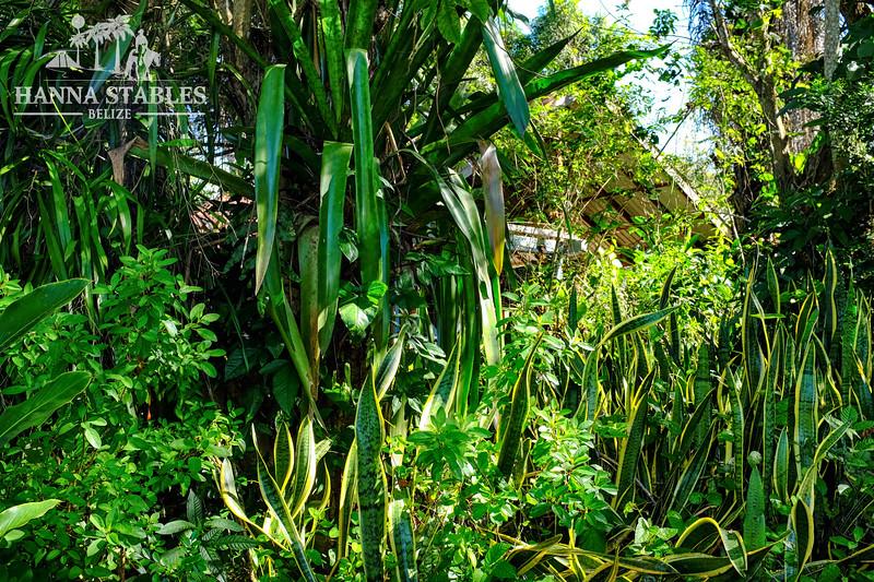 hanna-garden-2.jpg