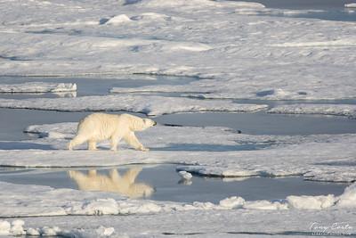 2011 Svalbard