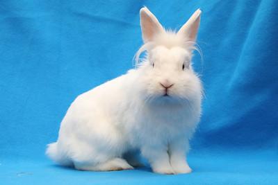 Rabbit Haven - Adoptions-Oct 22