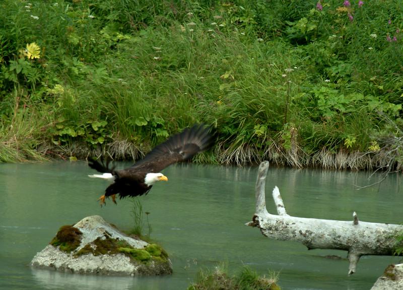 Eagle_Takeoff1-3.jpg