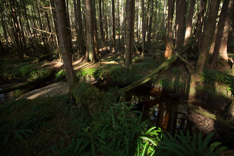 150913_Nikki_Forest_5594.jpg
