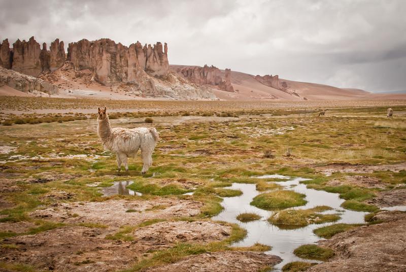 Atacama 201202 Salar de Tara (168).jpg