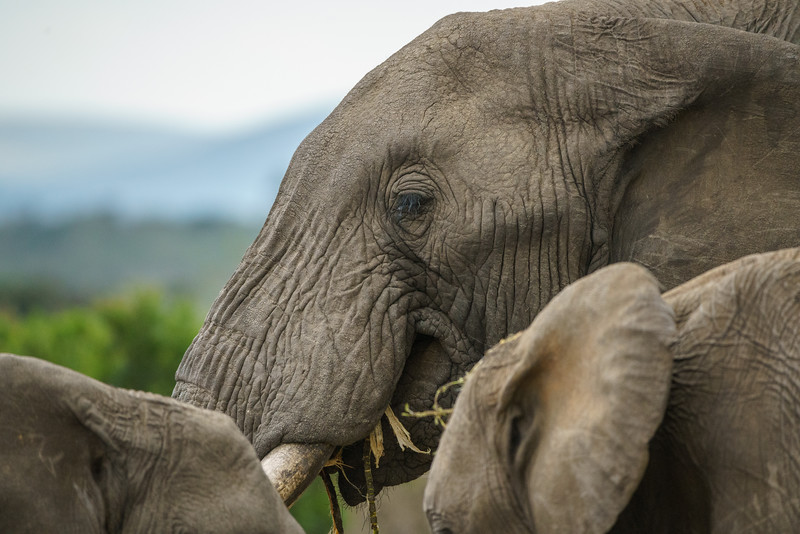 Kenya 2015-09167.jpg