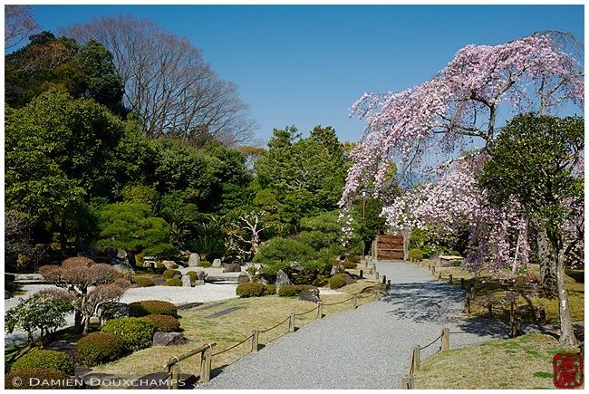 Chion-in Garden in springtime