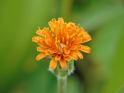 Wildflowers and Macro