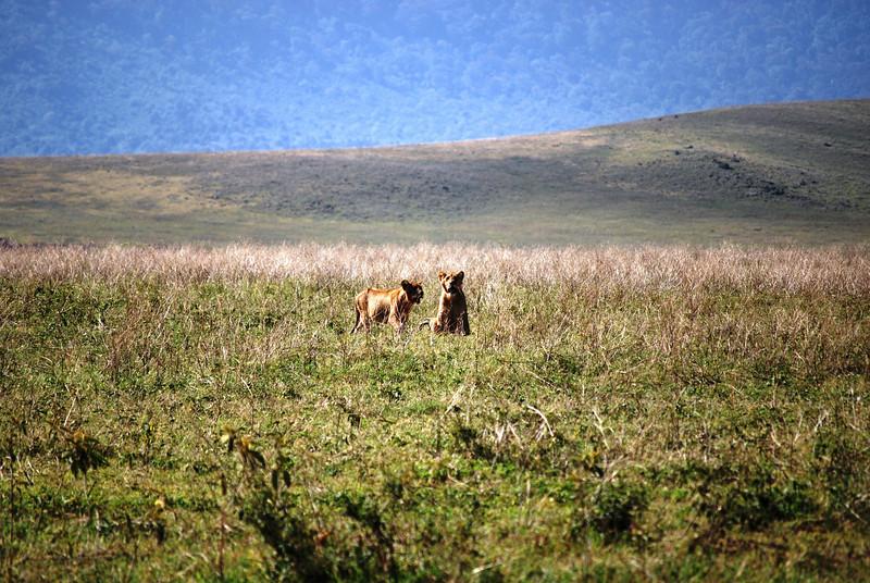 Ngorongoro (59).JPG