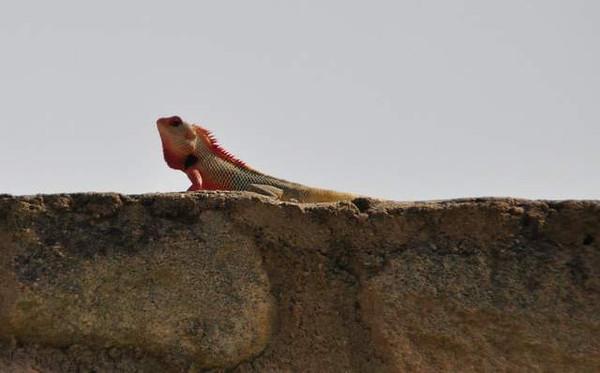 Salalah, Southern Oman