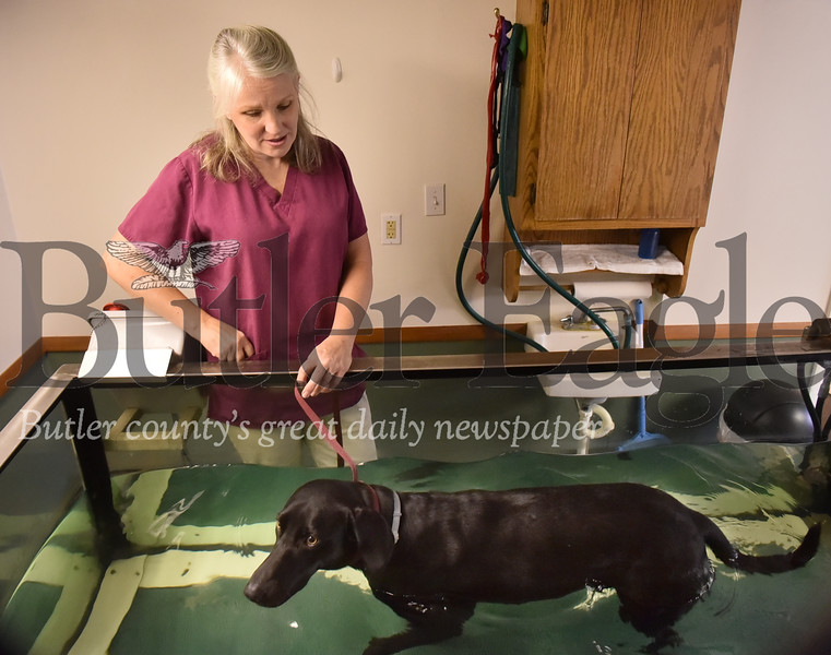25992 Twinbrook Animal Clinic Pet therapy