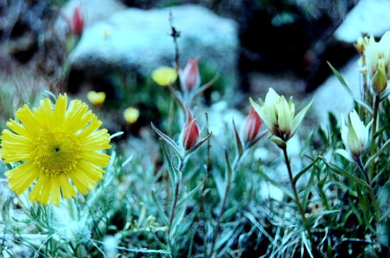 amh FLOWERS (1131).jpg