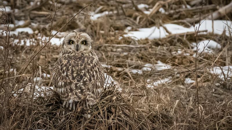 SE owl on the ground one half Sony frame ISO 3200-00933.jpg