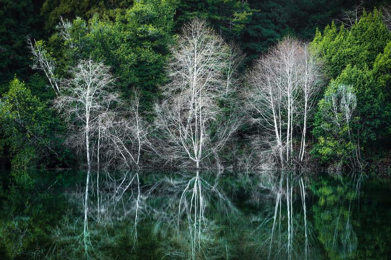 White Alders, Gualala River