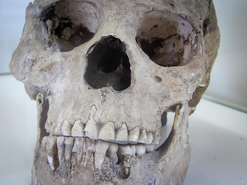 Tarija 201205 Museum Paleontology (20).jpg