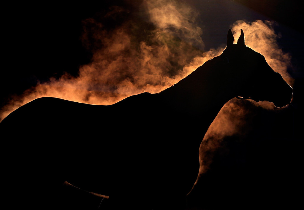 . A horse gives off steam as it is bathed during early morning workouts ahead of the 140th Kentucky Derby at Churchill Downs on May 2, 2014 in Louisville, Kentucky.  (Photo by Jamie Squire/Getty Images)