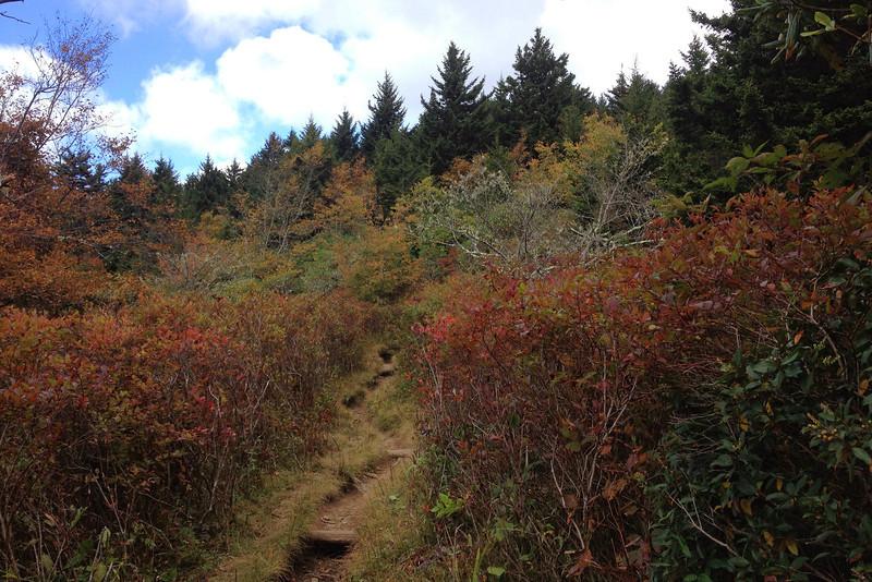 Old Butt Knob Trail -- 5,820'