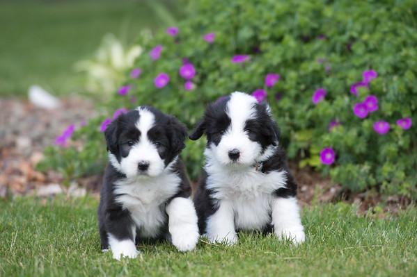 Puppies 6-7-2020