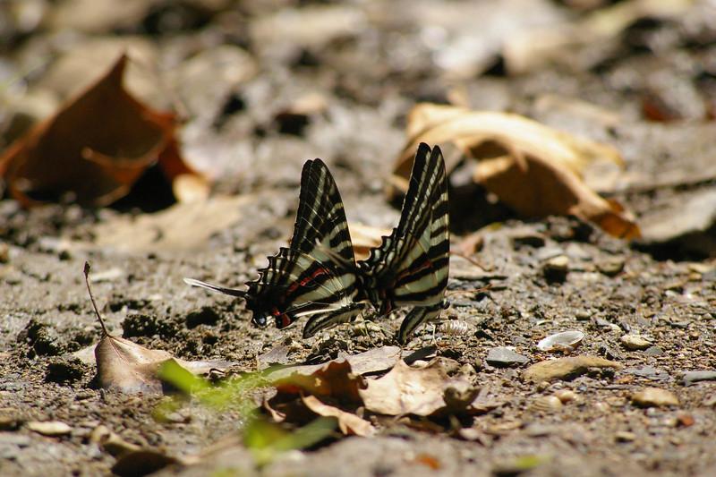 butterflyapalooza 108.jpg