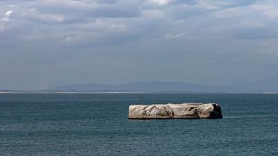 Seal Island tour and peguins