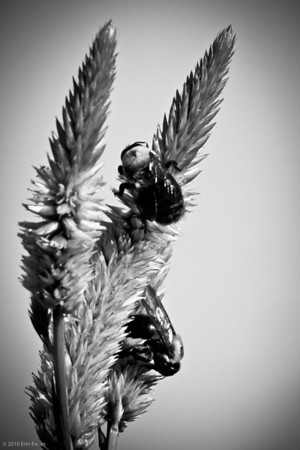 Meadowlark B&W and Color Slideshow