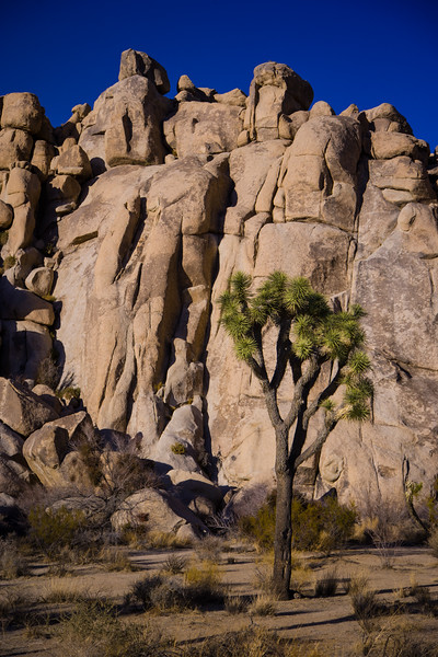 Arizona07-0015.jpg