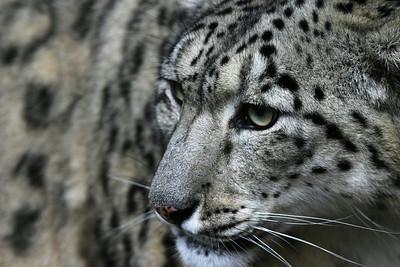 Beautiful World - Animals