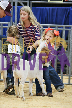 Peewee Showmanship Goats