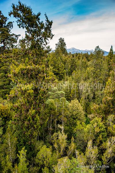 West Coast Tree Walk Hokitika pano