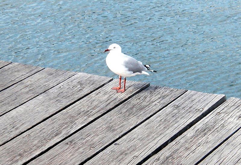 28. Darling Harbour.JPG