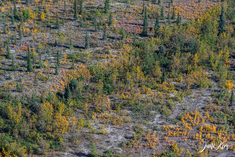 Rust's_Beluga Lake__6100850-2-Juno Kim.jpg