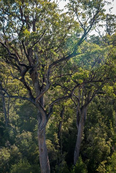 Tasmania-53.jpg