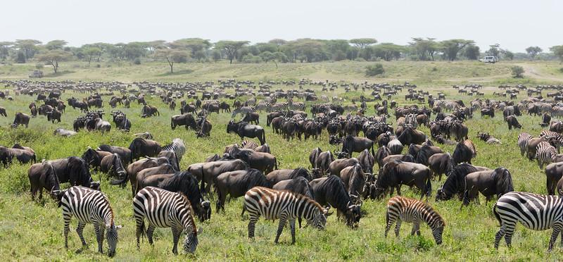 Tanzania_3S4A4546-Edit.jpg