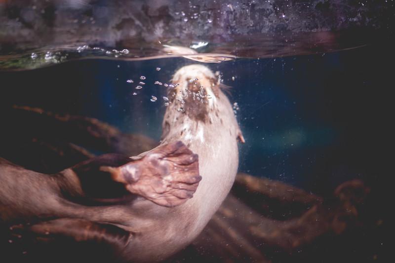 2014 10 25 Dallas World Aquarium-20.jpg