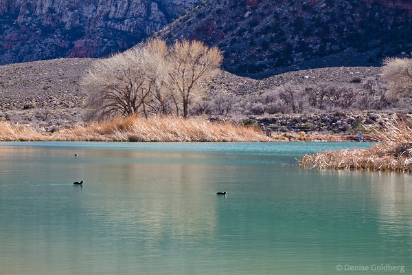 shimmering water in a pond at Spring Mountain Ranch
