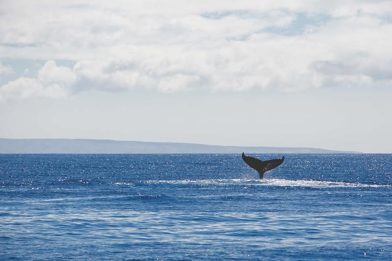 whaley-1.jpg