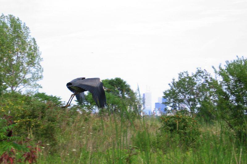 HumberBay_2005-07-31_014c.jpg