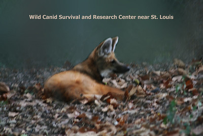 Wild Canid Center
