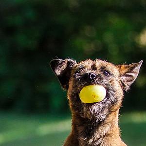 Rossi Dog