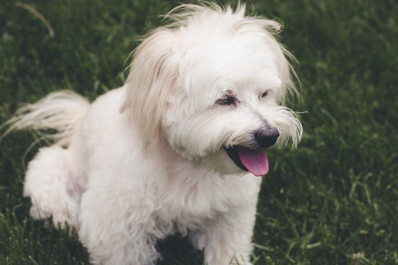 opal mike dogs (1 of 1)-86.jpg
