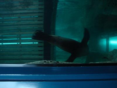 Syndey Aquarium