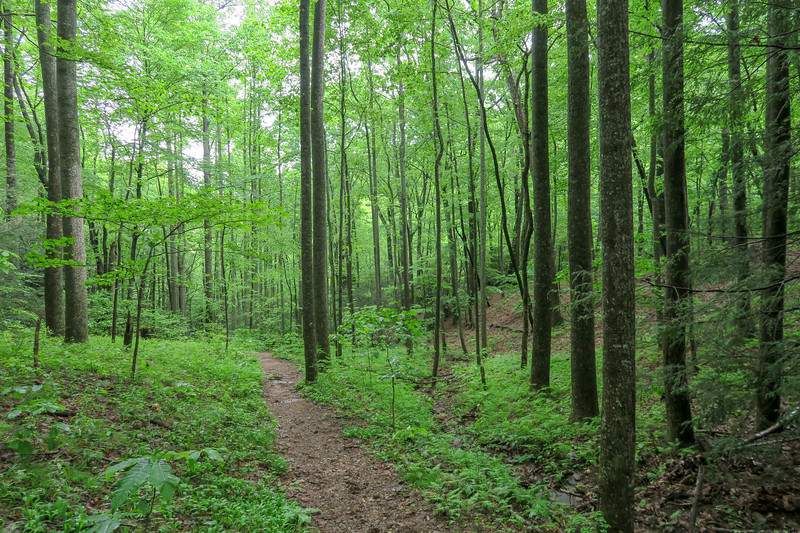 Sleepy Gap Trail -- 2,720'