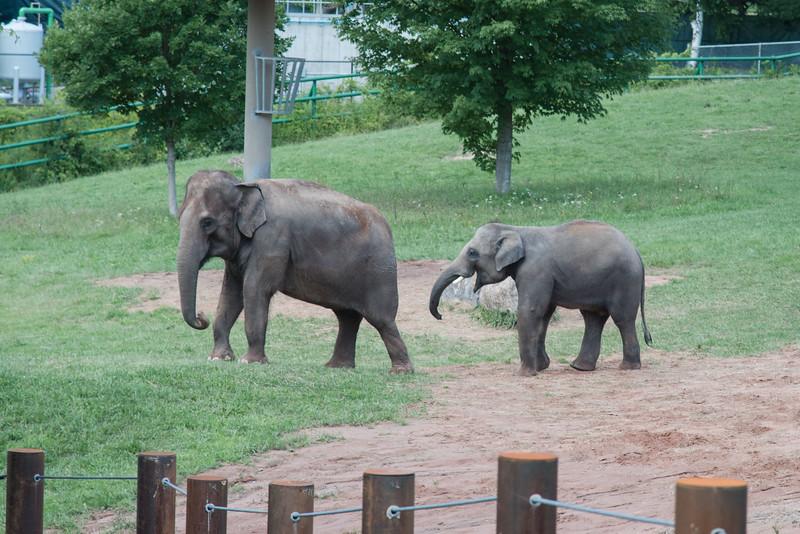 Syracuse Zoo August 2020-14.jpg