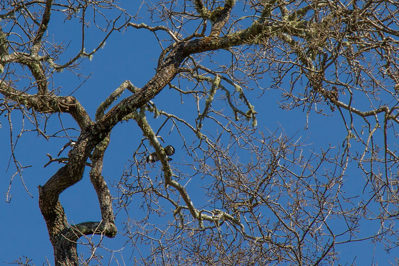 Filoli-adaptations_hike-11Mar13-07.jpg