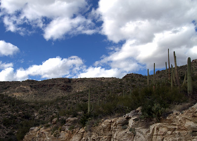 Road to Mt. Lemmon