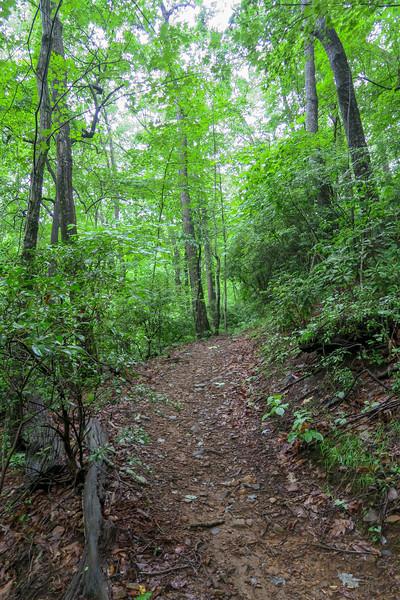 Barnett Branch Trail -- 3,520'